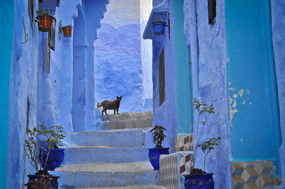 blue-streets-of-chefchaouen-morocco-3-660x438