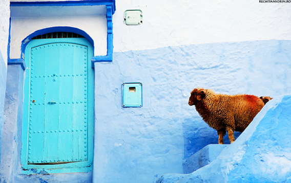 blue-streets-of-chefchaouen-morocco-8-660x416