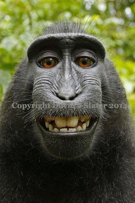 monkeybusiness568