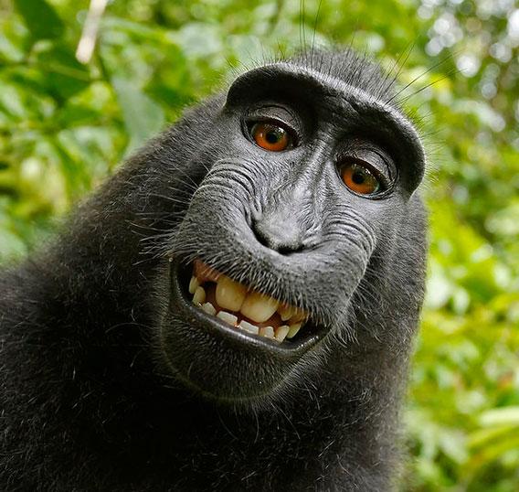 Monkeybusiness-568
