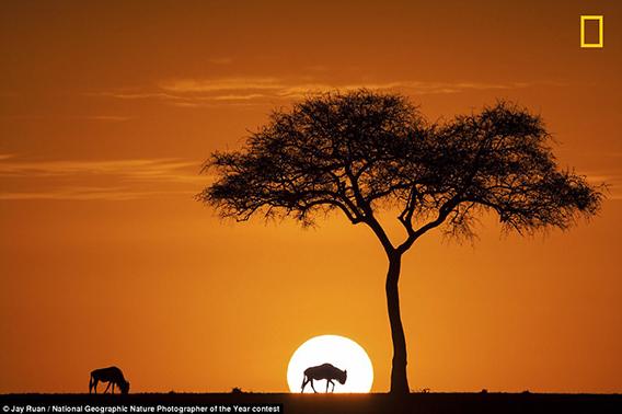 Sunrise_of_Maasai_Mara_by_Jay_Ruan-568